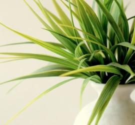 plant-828714_1920